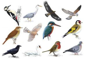 date of birth bird characteristics