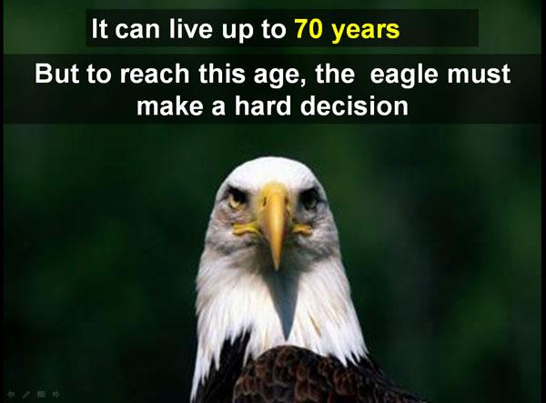 eagle-hard-decision