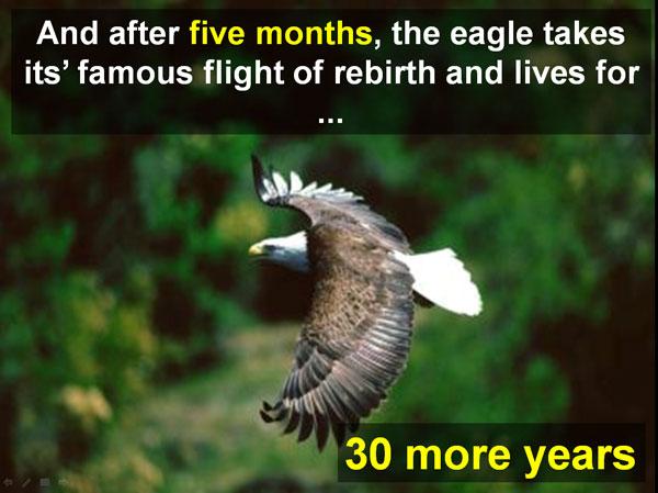 famous-rebirth-flight