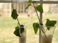 microwave water effect on plant