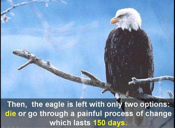 options-before-eagle
