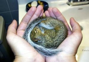squirrel-baby