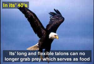 eagle-in-forties