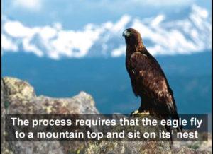 eagle-on-mountain-top