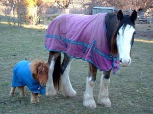 horse baby