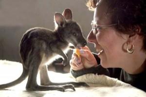 little-kangaroo